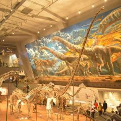 Chongqing Museum of Natural History  (New Hall) User Photo