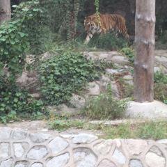 베이징 동물원 여행 사진