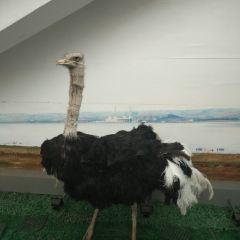 岱海溫泉城用戶圖片