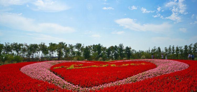 Zhoupu Sea of Flowers3