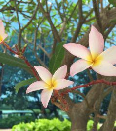 苏拉特游记图文-天竺的花——印度苏拉特鲜花专辑