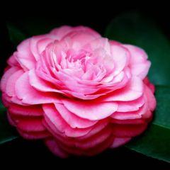Jinhua Tea Garden User Photo