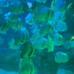 칭다오 극지해양세계 여행 사진