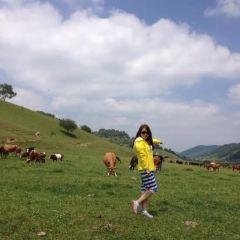 關山草原用戶圖片