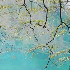 樹正溝用戶圖片
