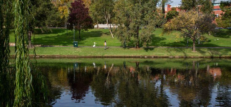 Torrens River2