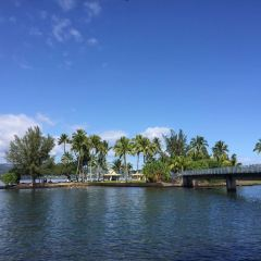 Coconut Island User Photo