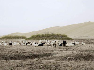 羅布人村寨