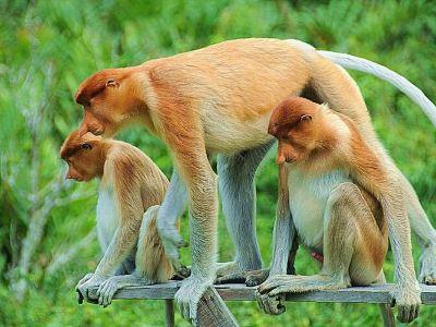 코주부원숭이 보호구역