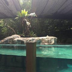 싱가포르 동물원 여행 사진
