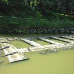 있는 중국 악어 호수 여행 사진