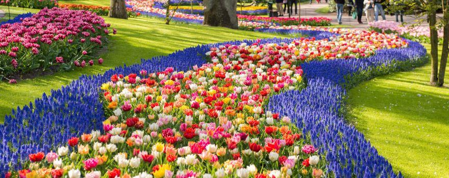 Oceans of Flowers in Amsterdam