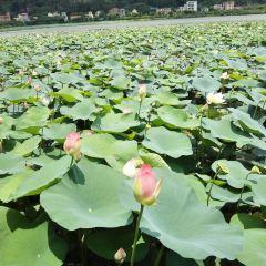 Guorui Happy World User Photo
