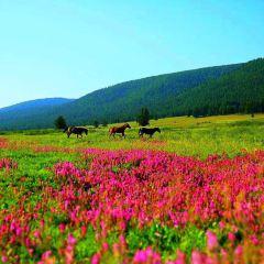 Balikun Grassland User Photo