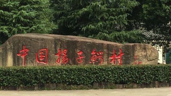 中國揚子鱷村