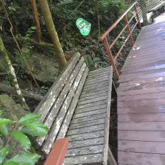 야노다 열대우림 여행 사진