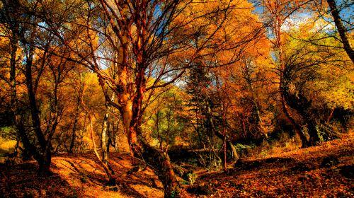坎布拉國家森林公園