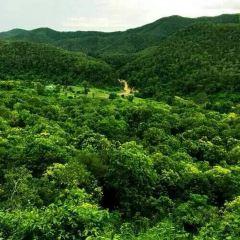 Tree Top Adventure Park Jungle leap User Photo