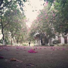 Southern Medical University Shunde Campus User Photo