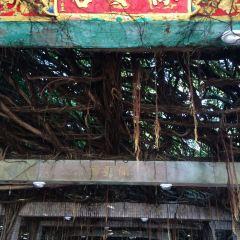 Tongliang Great Banyan User Photo