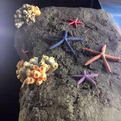 난징(남경) 해저세계(하이양스제) 여행 사진