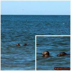 Nauset Light海灘用戶圖片