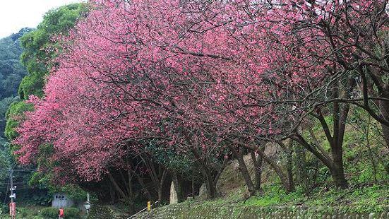 Singhua Garden