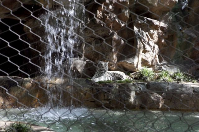 Siegfried & Roy's Secret Garden & Dolphin Habitat