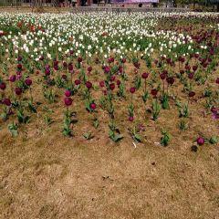 청두프로방스국제라벤더장원 여행 사진