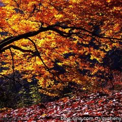 Guangwu Mountain User Photo