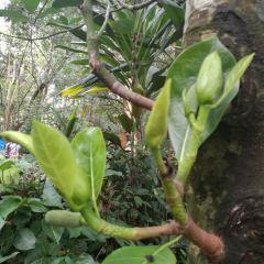 興隆熱帶植物園用戶圖片