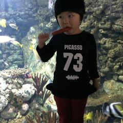 南京海底世界用戶圖片