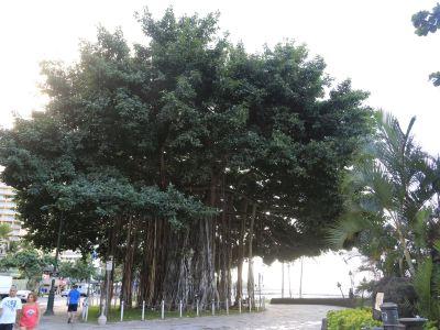 Prince Kuhio Park