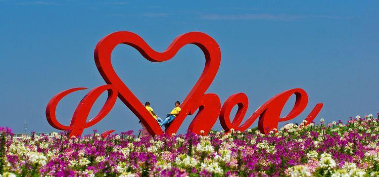 Zhoupu Sea of Flowers2