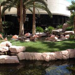 Flamingo Wildlife Habitat User Photo