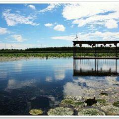 那木斯萊濕地用戶圖片