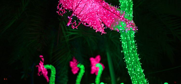 Dubai Garden Glow3