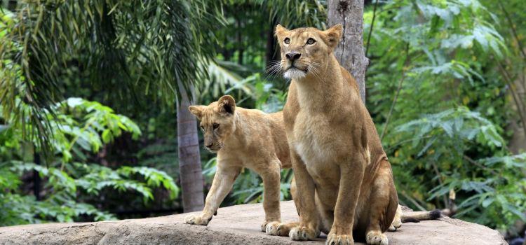 Bali Safari and Marine Park1