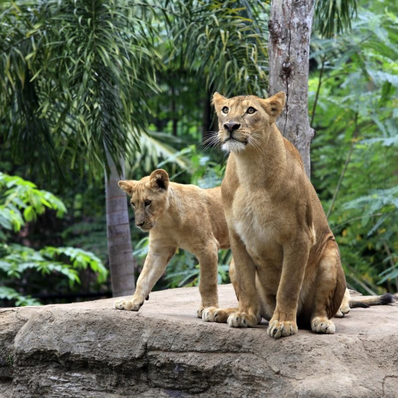 Bali Safari and Marine Park travel guidebook –must visit