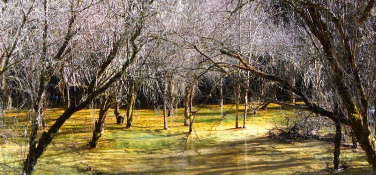 Mounigou Scenic Area1