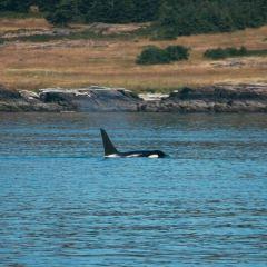 鯨魚觀賞用戶圖片