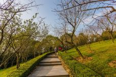 南山植物园-重庆-C_image