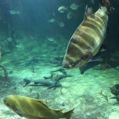 溫哥華水族館用戶圖片