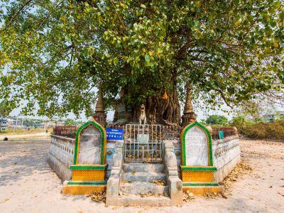 Tree Covered Pagoda