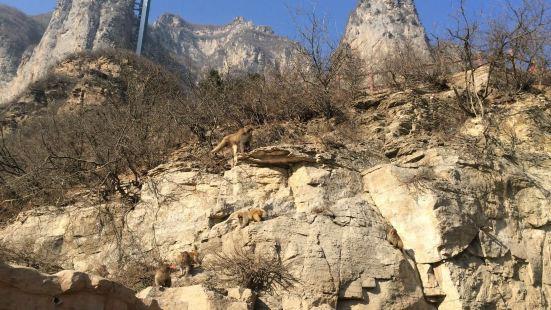 Henan Taihang Mountain Macaque National Nature Reserve