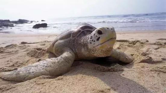 Turtle National Reserve Areas