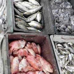 Yazhou Central Fishing Port User Photo