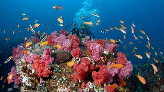 珊瑚礁教學