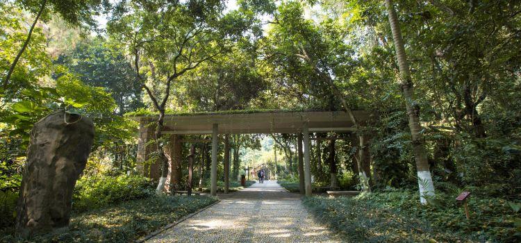 Guangxi Medical Botanical Garden3