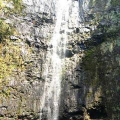 마노아 폭포 여행 사진